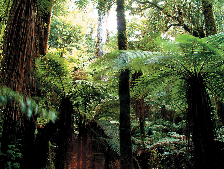 CFS19 Whirinaki Forest Park Lake Taupo Whirinaki Rainforest Experiences